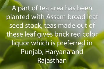 Jayshree Dooars and Terai Jayantika latestwork