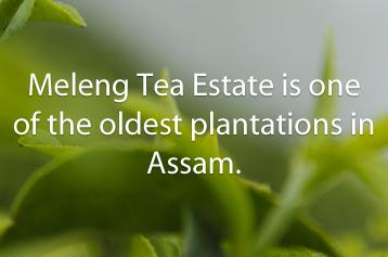 Jayshree Assam Meleng latestwork