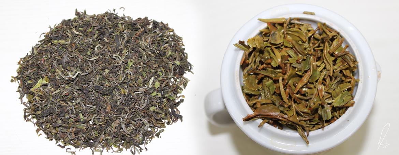 Jay Shree Tea & Industries Pvt Ltd Banner